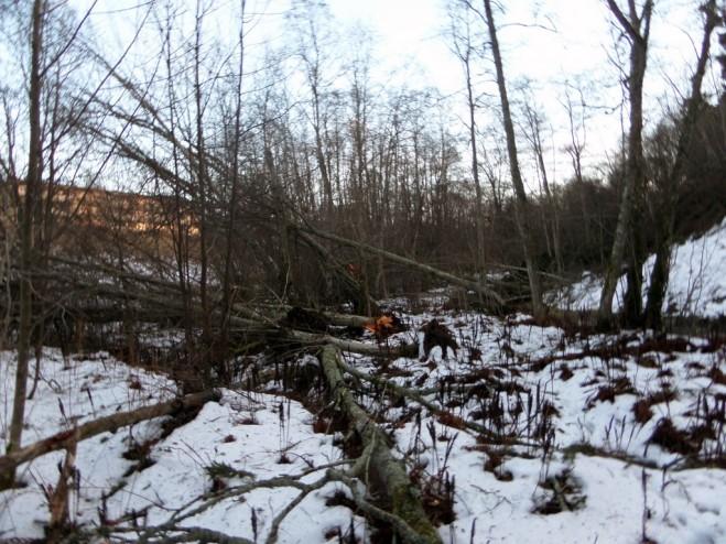 Hävitystä-linnunpönttöalueella-1024x768