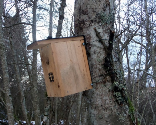 Linnunpönttö-samassa-puussa-1024x820