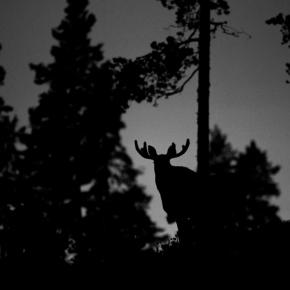 Heikki Willamo: Pyhienjäljillä